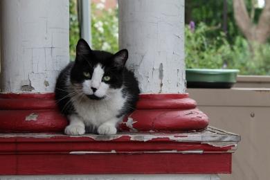 West Philly Kitty, West Philadelphia