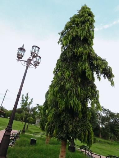 lascrucespark