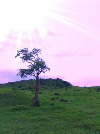 When the sky shines pink